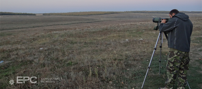 Evaluarea riscului de coliziune a păsărilor şi liliecilor cu turbinele eoliene