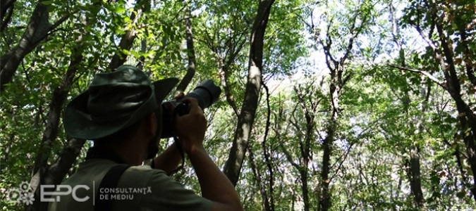 Inventarierea speciilor protejate