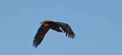 Monitorizarea biodiversităţii – parc eolian Mihai Viteazu