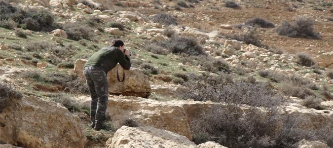 Studii de avifauna – Parc Eolian Tafila, Iordania