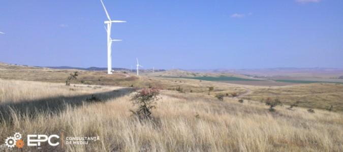 Studiu avifaunistic pentru parcuri eoliene